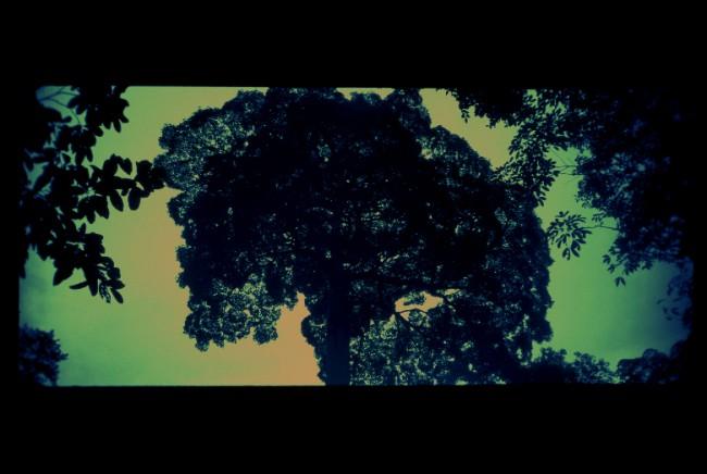 TROPICAL TREE - Leo Pellegatta ©2015
